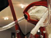 Le poulet sans cortex cérébral. Bientôt dans vos assiette avec le TAFTA. Photo André Ford